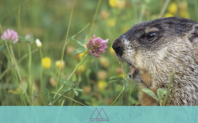 What if EVERY Day were a Ground-Hog Day?